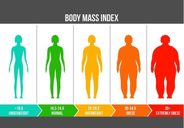 Các mức độ của cơ thể